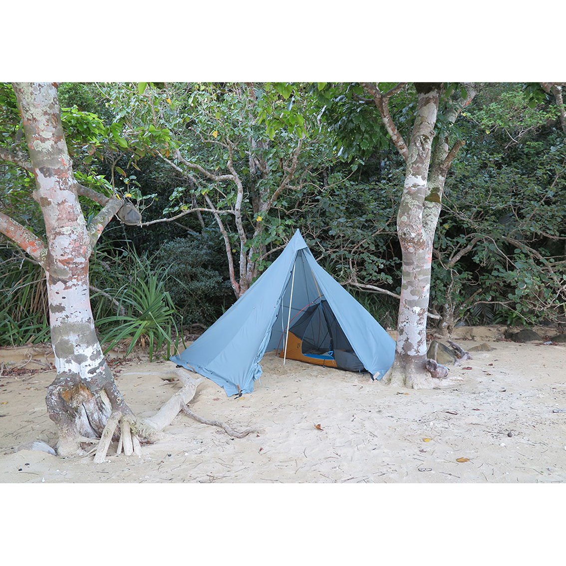 SCREES×tent-Mark DESIGNS ヤリ 3×3